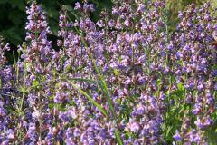 fioriepiante056